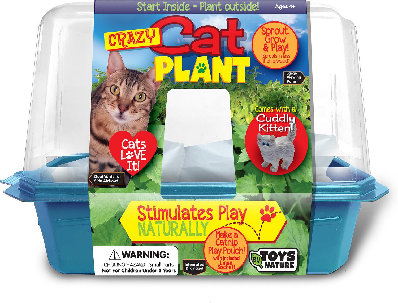 Crazy Cat Plant
