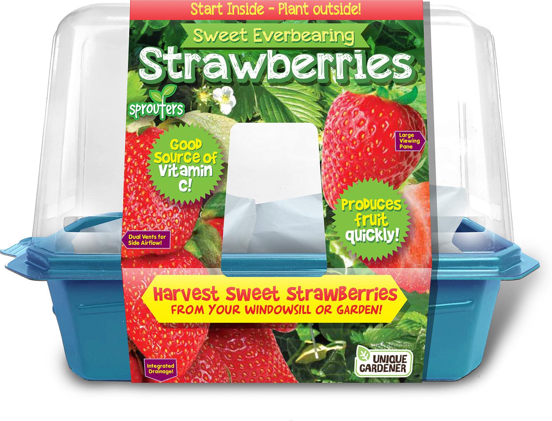 Sweet Everbearing Strawberies